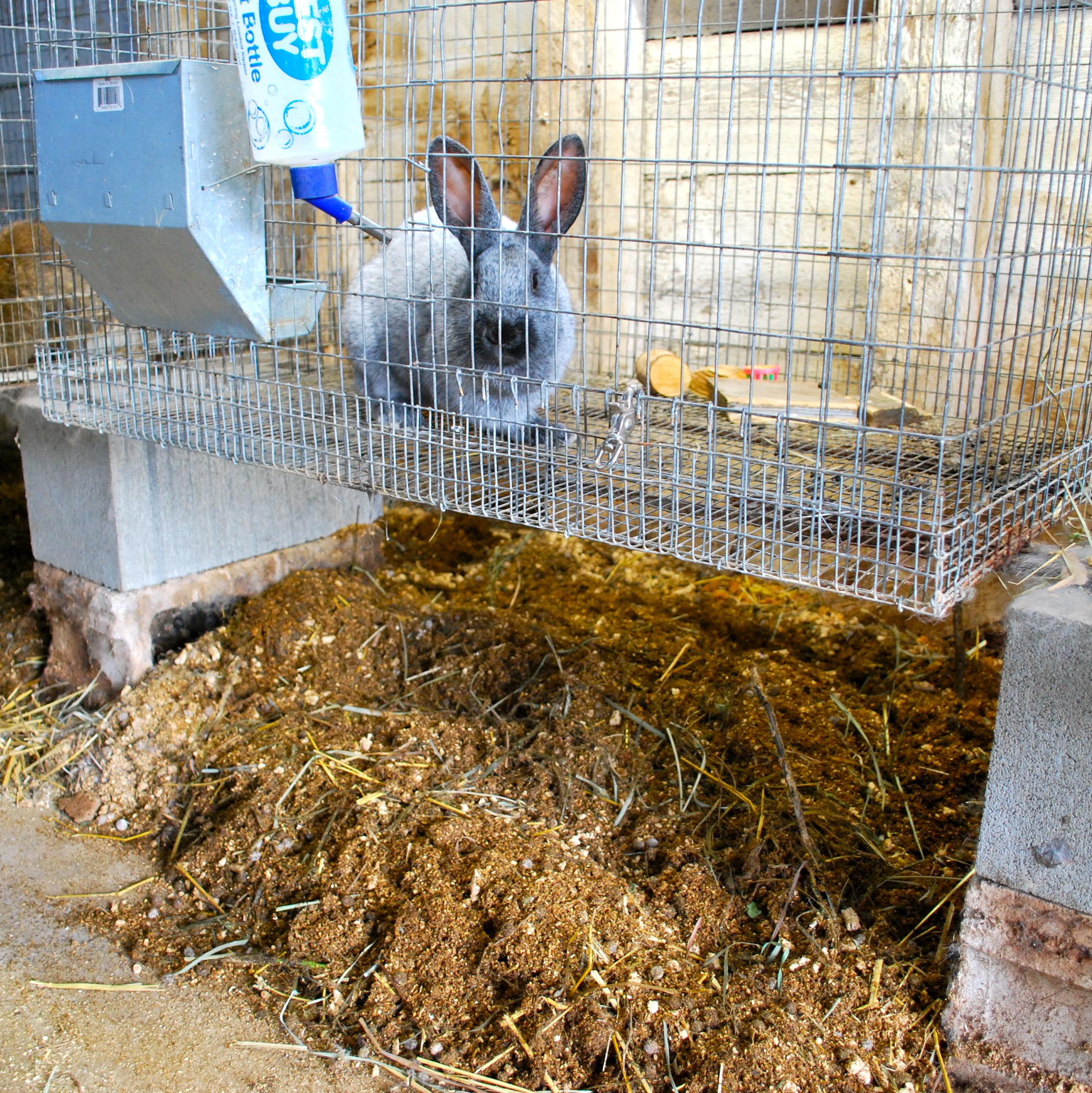 Deep Litter Method For Rabbits Abernathy S Rabbitry