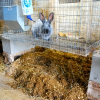 Deep Litter Method for Rabbits