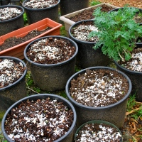 Eggshells Instead of Bone Meal for the Garden