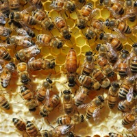 Dealing with a Bad Bee Seller (Paul Petersen of Red Queen Apiaries)