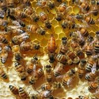 Dealing with a Bad Bee Seller (Paul Petersen of Red Queen Apiaries)